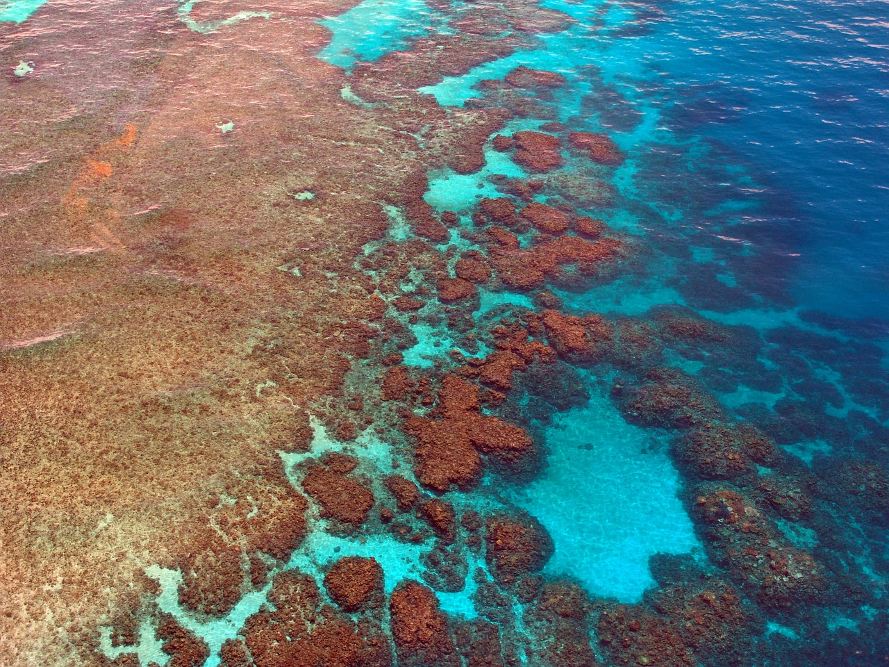 A section of the great barrier reef with red coral above the waterline of aqua seas