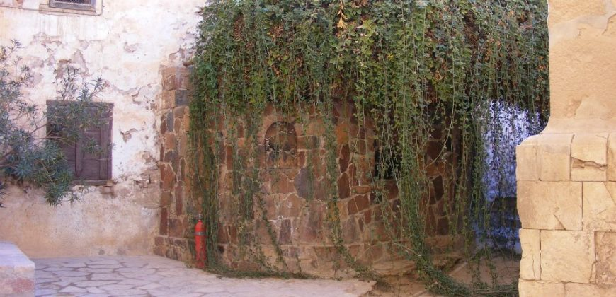 The burning bush - trailing moss pouring out of a tiled round stone structure in a courtyard