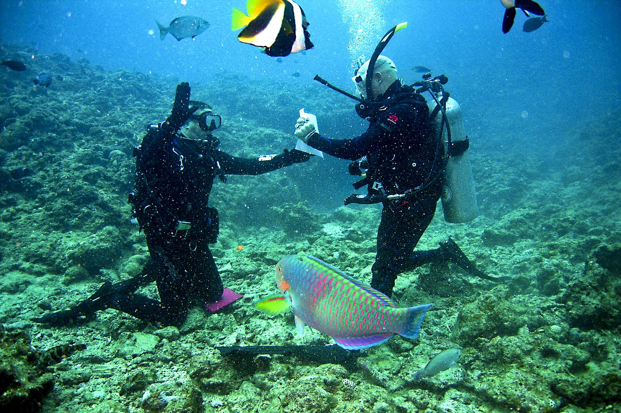 Two divers practising skills with multi coloured parrot fish and black, white and yellow striped angelfish in the foreground