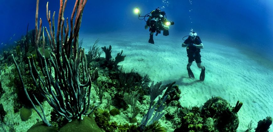 Scuba divers near the sandy bottom with soft corals in the foreground