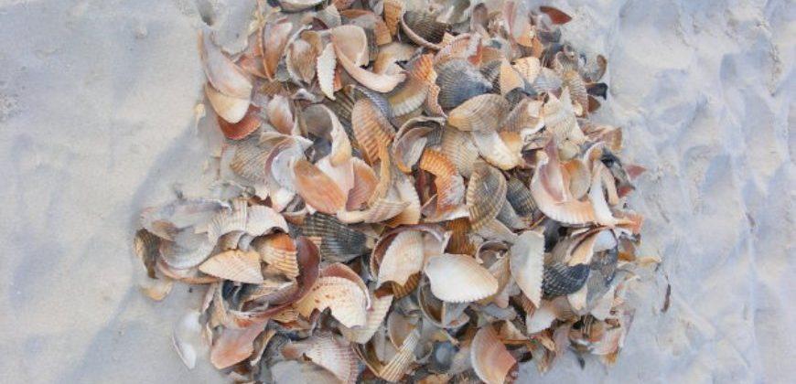 A pile of seashells on the beach