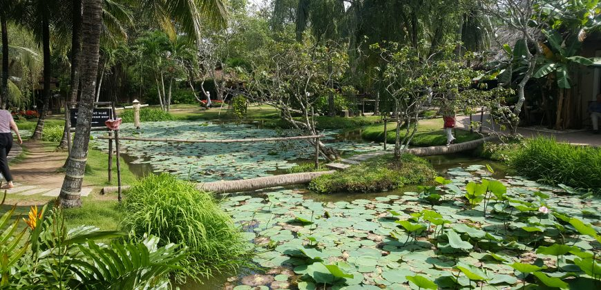Lilly ponds surrounded by palm trees