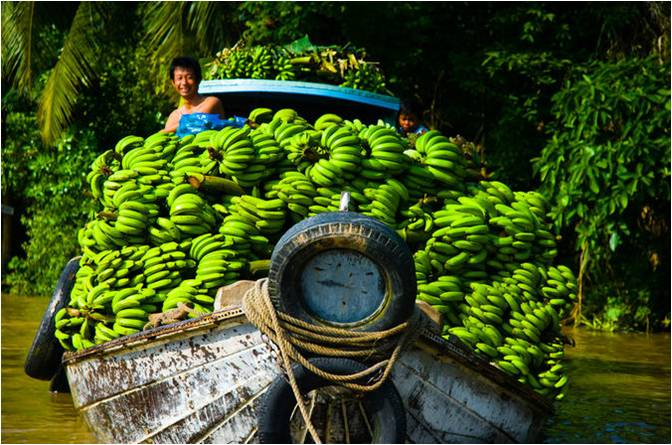A boat absolutely laden with green bananas with a smiling captain on board.