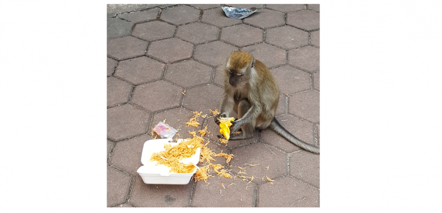 A monkey eating food from a takeaway container on the floor at the Batu Caves